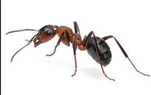 exterminators - pest control